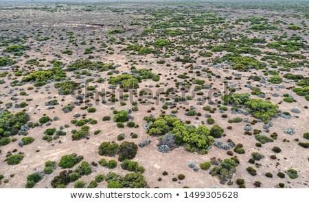 Green Tree and Desert Stock photo © jkraft5