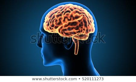 Emberi agy szimbólum intelligencia puzzle kék izzó Stock fotó © Lightsource