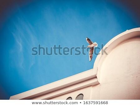Seagull Flying Past Pier Stock photo © dbvirago