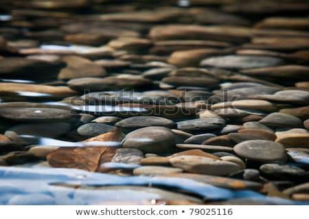 Poco profondo fiume pietre rocce foresta albero Foto d'archivio © ondrej83