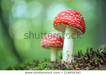 Close Up of Wild Mushroom in Forest Stock photo © juniart