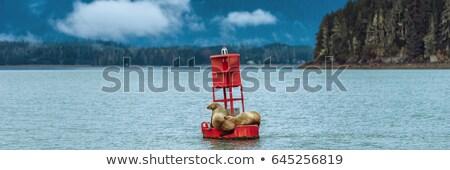 Bója tenger piros óceán kék oroszlán Stock fotó © hlehnerer