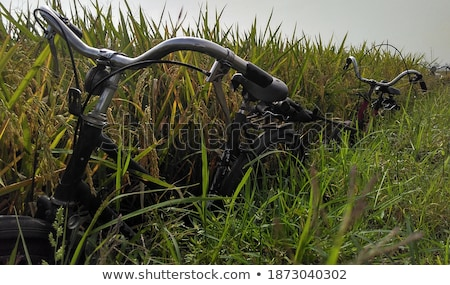 Abandoned Bike at Paddy Field Stock photo © ivanhor