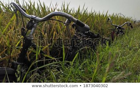 campo · estoque · foto · natureza · folha · planta - foto stock © ivanhor