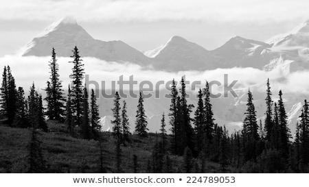 Аляска · за · лес · силуэта · деревья - Сток-фото © miracky