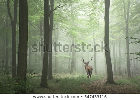 deer in forest nature wildlife Stock photo © goce