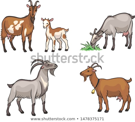 grazing goats stock photo © compuinfoto