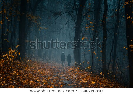 Footpath among yellowed trees in autumnal park Stock photo © Paha_L