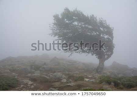 Strong winds in the mountains  Stock photo © Kotenko