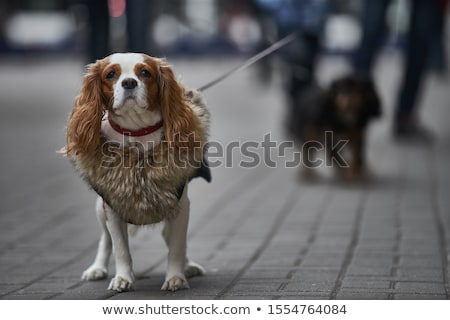 Kis kutya portré kicsi golden retriever kutyakölyök világoszöld Stock fotó © simply