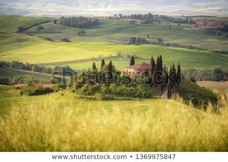 tuscany landscape field farm house among cypress trees italy vintage stock photo © photocreo