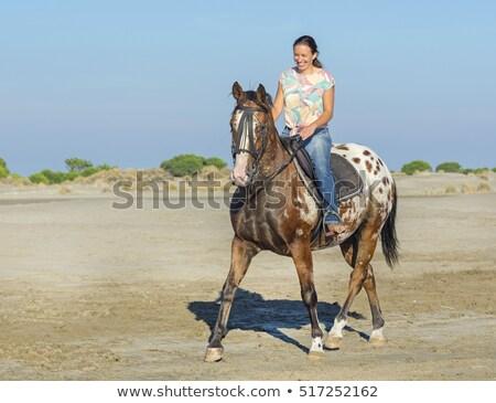 woman and appaloosa horse walking on the beach Stock photo © cynoclub