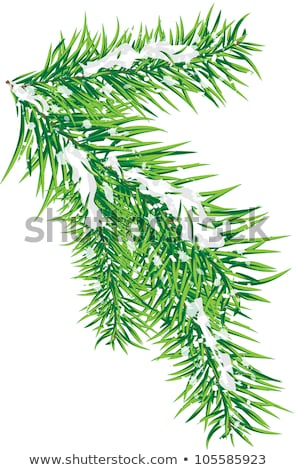branches of fir tree strewn lightly with snow Stock photo © ssuaphoto