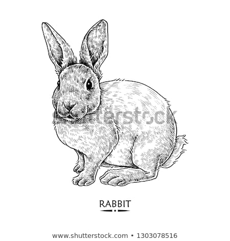 ウサギ 手 クリスマスツリー 浅い ツリー 美 ストックフォト © Phantom1311