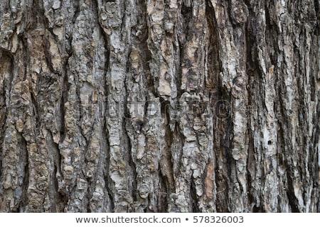 Eski ağaç havlama kahverengi doku Stok fotoğraf © tuulijumala