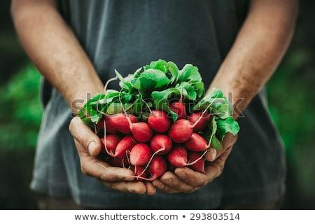 augmenté · locale · texte · légumes · frais · fraîches · organique - photo stock © yuliyagontar