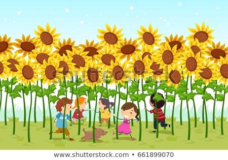 Stickman Kids Sunflower Field Play Illustration Stock photo © lenm