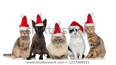 team of five cute cats wearing santa hats sitting and standing Stock photo © feedough