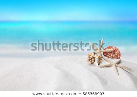 Scène dieren schelpen illustratie papier achtergrond Stockfoto © colematt