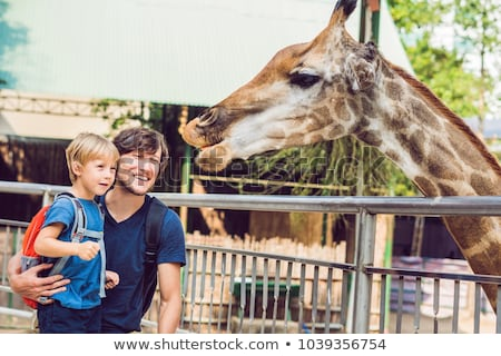 Father and son watching and feeding giraffe in zoo. Happy kid having fun with animals safari park on Stock photo © galitskaya