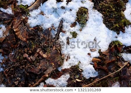 Olvad hó jég padló absztrakt fedett Stock fotó © sarahdoow