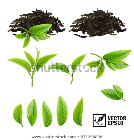 Сток-фото: Fresh And Dry Vector Green Tea Leaves