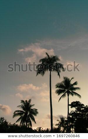 Tropicales hojas establecer negro planta ilustraciones Foto stock © derocz