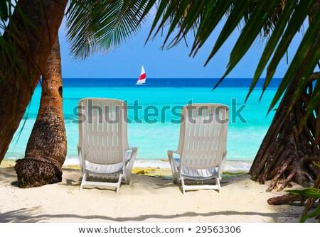 güneş · şemsiyesi · plaj · tropikal · şemsiye · yatak · palmiye · ağaçları - stok fotoğraf © vapi