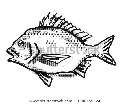север Запад черный австралийский рыбы Cartoon Сток-фото © patrimonio