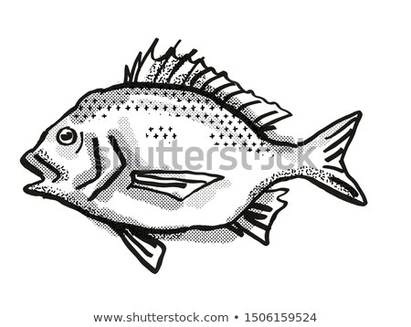 North West Black Bream Australian Fish Cartoon Retro Drawing Stock photo © patrimonio
