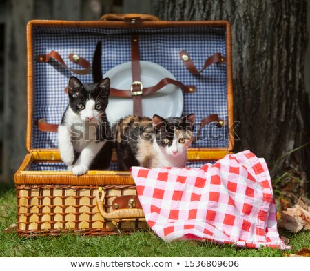 Cute cat in a picnic basket Stock photo © amaomam