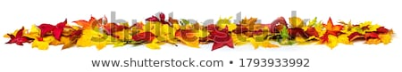 jesienny · ziemi · obraz · wyschnięcia · pozostawia · zielone - zdjęcia stock © pressmaster