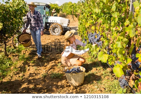 woman working in a vineyard stock photo © photography33