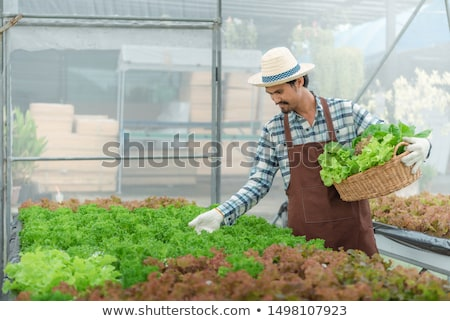Couple picking vegetables Stock photo © photography33