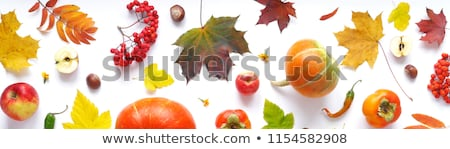 background frame with vegetable golden pattern stock photo © yurkina