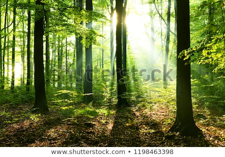 Footpath in a Beautiful Green Forest Stock photo © RazvanPhotography