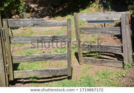 Fechado velho rústico portão verde gramíneo Foto stock © scheriton