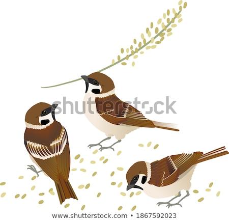 halcón · árbol · viendo · pequeño - foto stock © elenarts