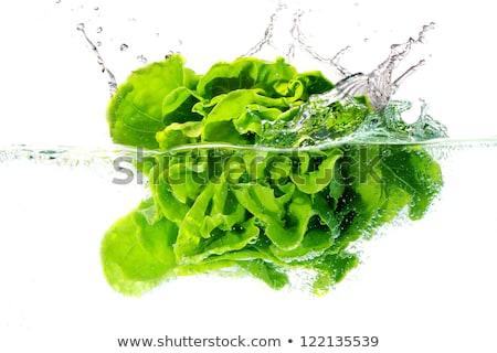 água · erva · daninha · padrão · textura · árvore · folha - foto stock © muang_satun