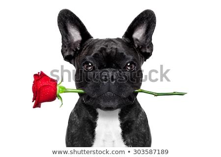 Puppy dog in love heart box Stock photo © lovleah