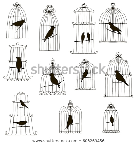 Foto stock: Mão · gaiola · vetor · feminino · aves