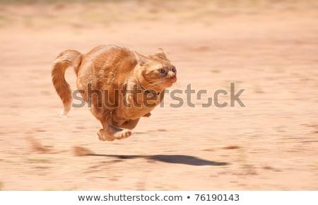 Rapide courir rouge chat dessin peinture Photo stock © ddvs71