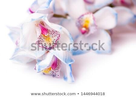 Virág gyönyörű rózsaszín orchidea izolált fehér virág Stock fotó © tetkoren