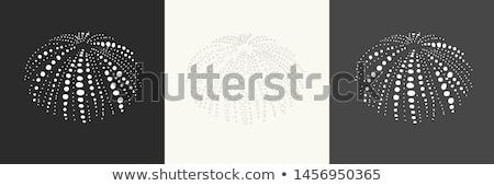shell of sea urchin or urchin stock photo © yongkiet