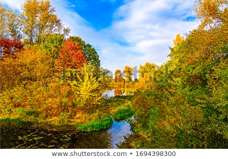 Outono lagoa água árvore floresta folha Foto stock © rbiedermann