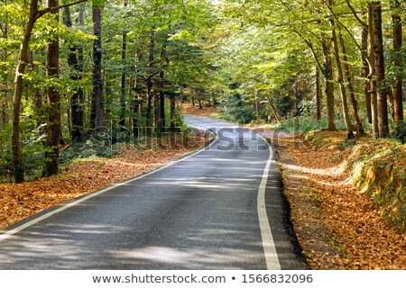 Yol çevirmek ağaçlar asfalt orman Stok fotoğraf © Steffus