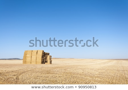 Agricultural irrigation on harvested wheat stubble field Stock photo © stevanovicigor