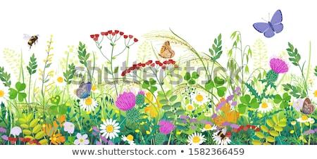 ストックフォト: 昆虫 · 花 · 長い · アンテナ · 緑 · グラスホッパー