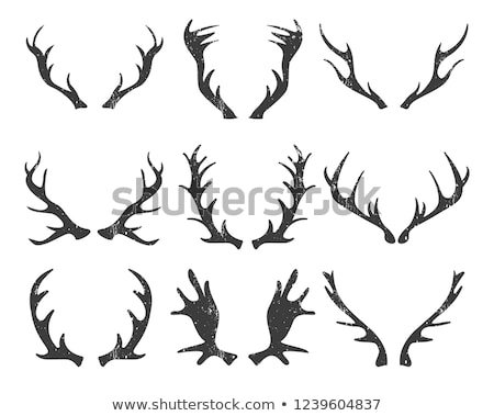 Buck Antlers Isolated Stock photo © AlphaBaby