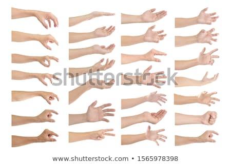 human hands isolated stock photo © leedsn